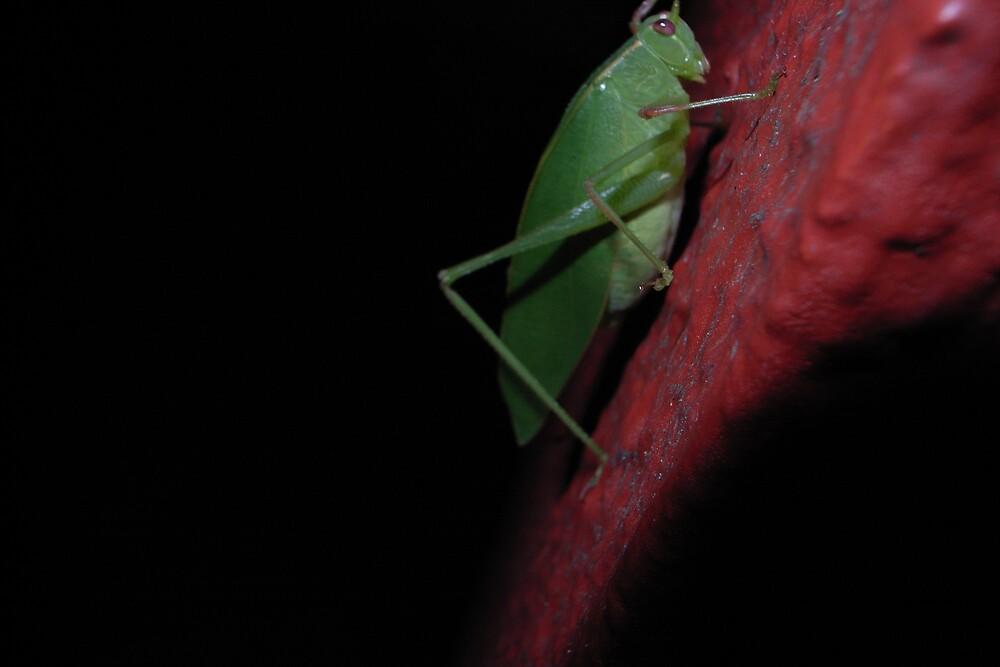 Night Hopper by Avene