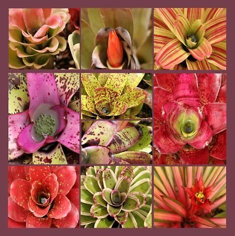 Bromeliad Montage by Ann Williams-Fitzgerald