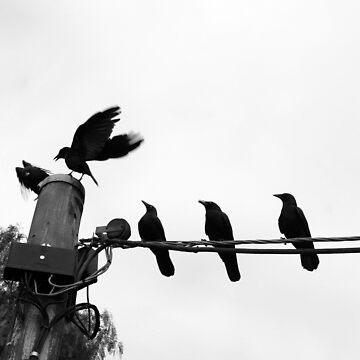 Pecking Order by fotojux