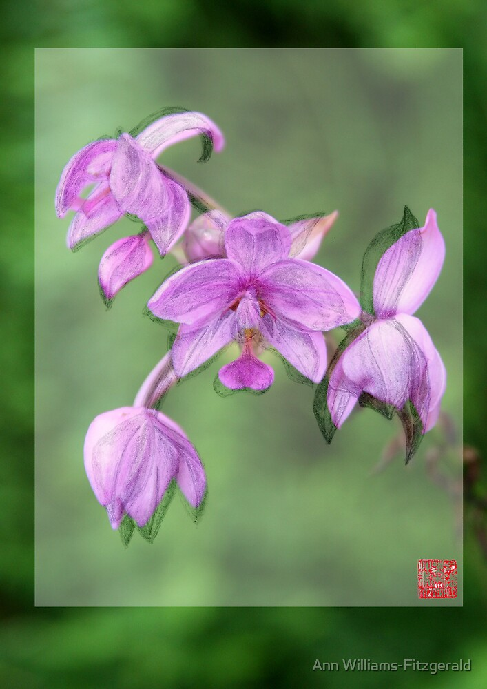 Merged Orchid # 3 by Ann Williams-Fitzgerald