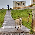 The sheep of Neist Point by James Anderson