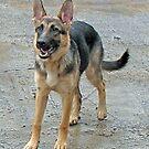 Ein Hund namens Sheba von BlueMoonRose