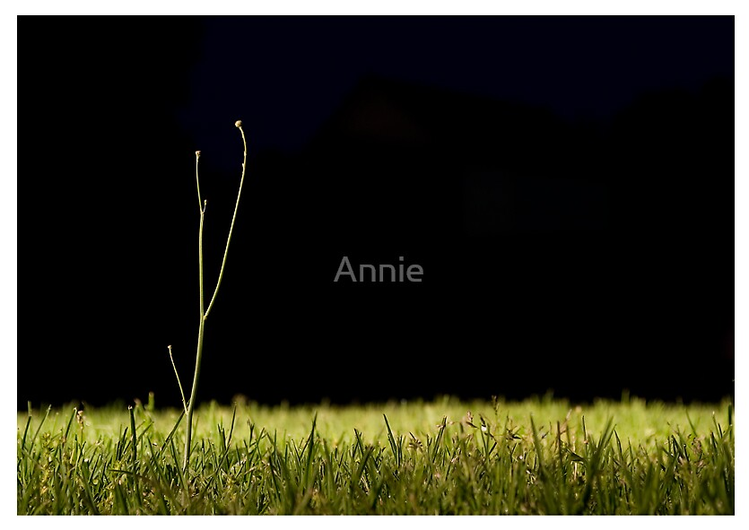 striving to be the individual that stands alone and above by Annie