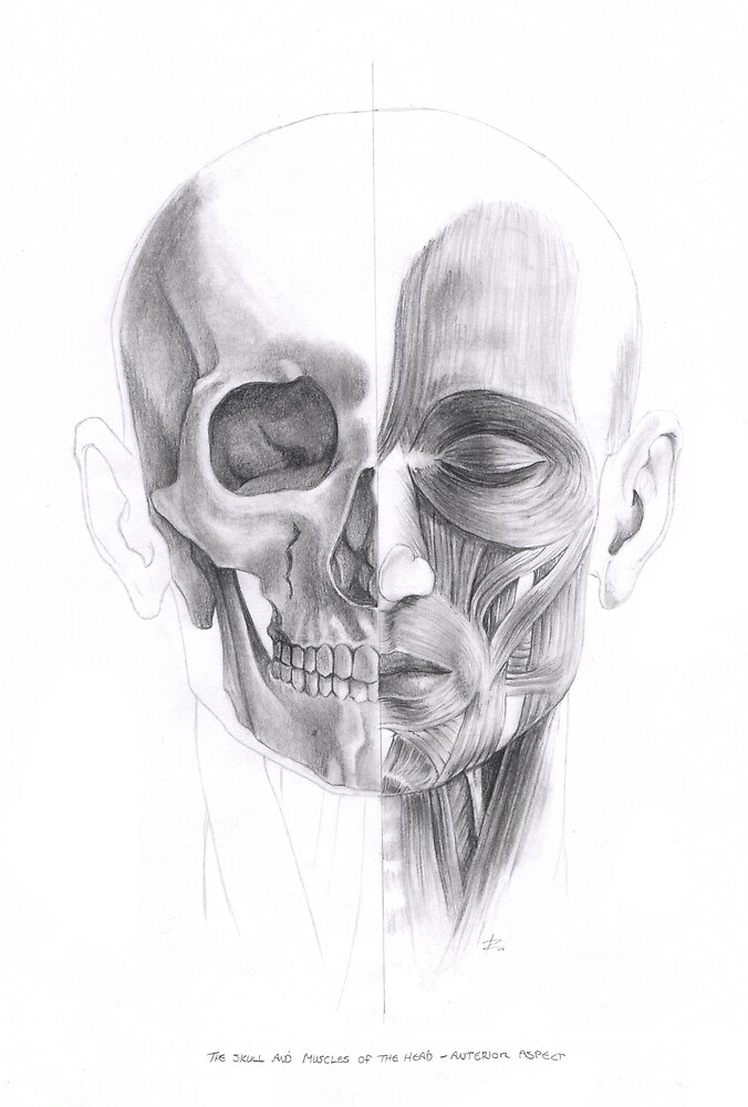 Anatomical Study of the Face by wyvex