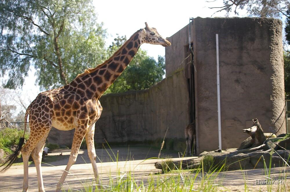 Giraffe by HaRaKiRi