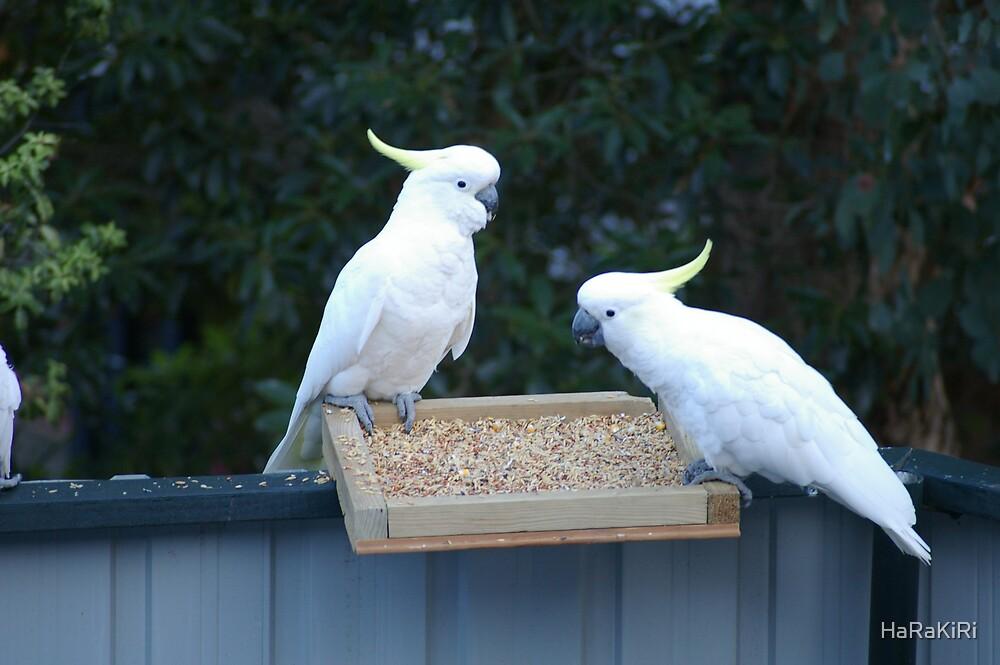 Two cockatoos by HaRaKiRi