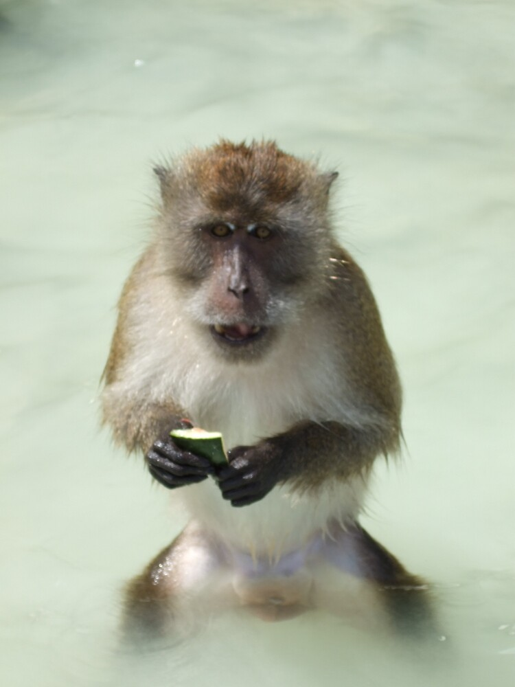 monkey by George Harder