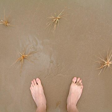 sandstar creatures feet by devster