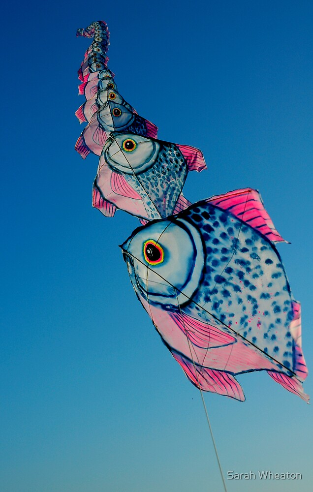 flying fish by Sarah Wheaton