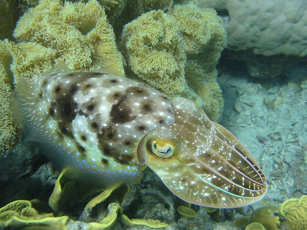 Cuttlefish by Wormfish