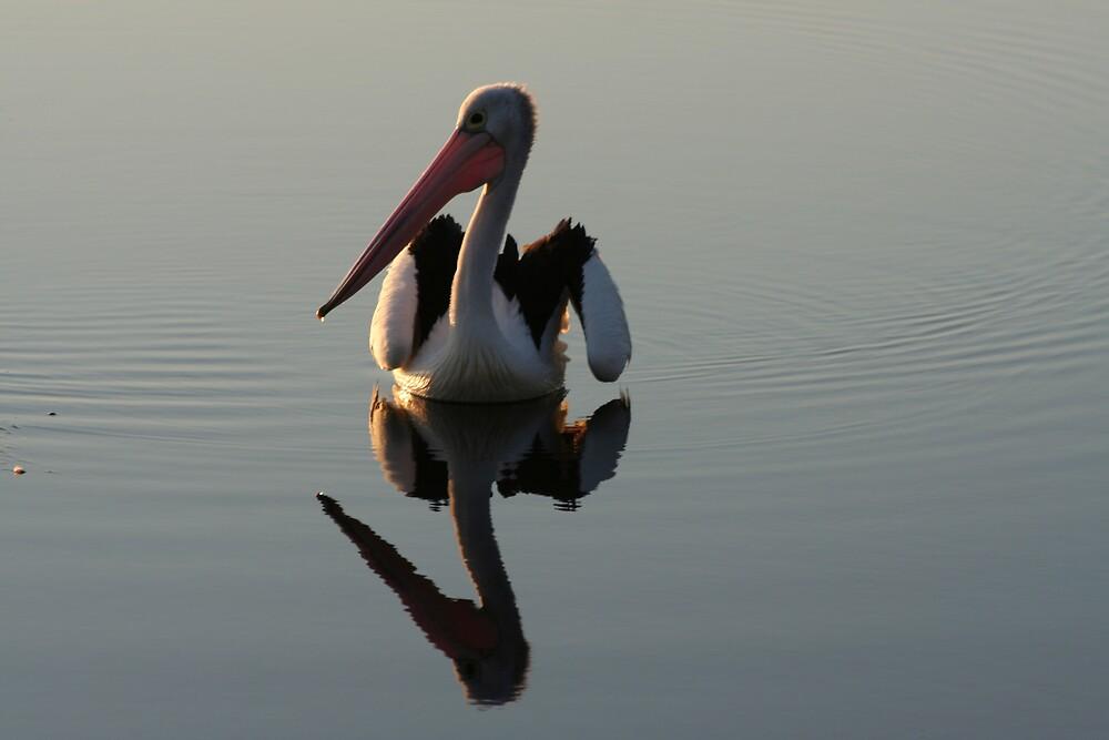 Pelican by veronique