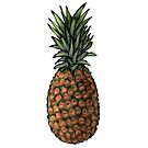 Sketch of a Pineapple by thatveganlife
