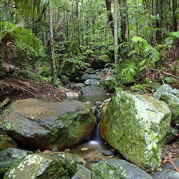 Border Ranges Rainforest by SteveKilburn