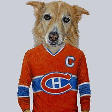 dog in sportwear by windzao