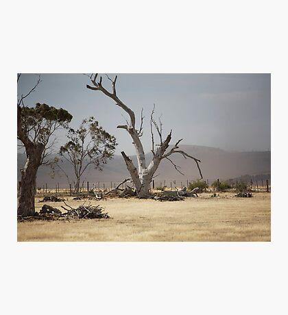 summer dry : 802 views Photographic Print