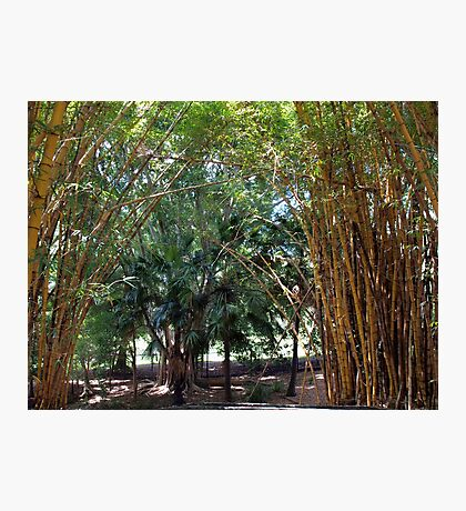 Bamboo Grove Photographic Print