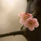 Twin Blossoms by fab2can