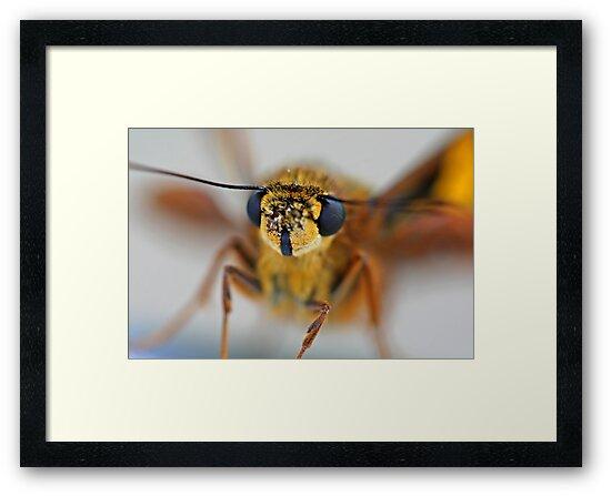 Moth Macro by Mark Snelson
