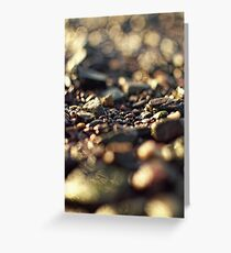 abstract bokeh sunlit stones Greeting Card