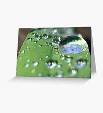 Grass Droplets Greeting Card
