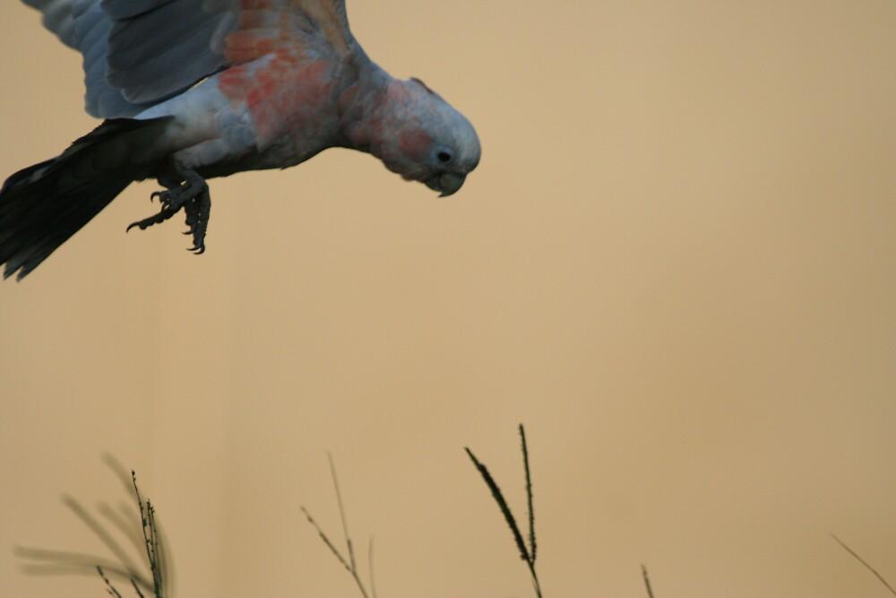 BIRD IN FLIGHT by FIJIGIRL
