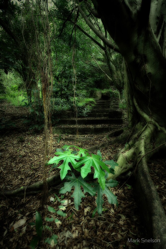 Enter the Forest by Mark Snelson