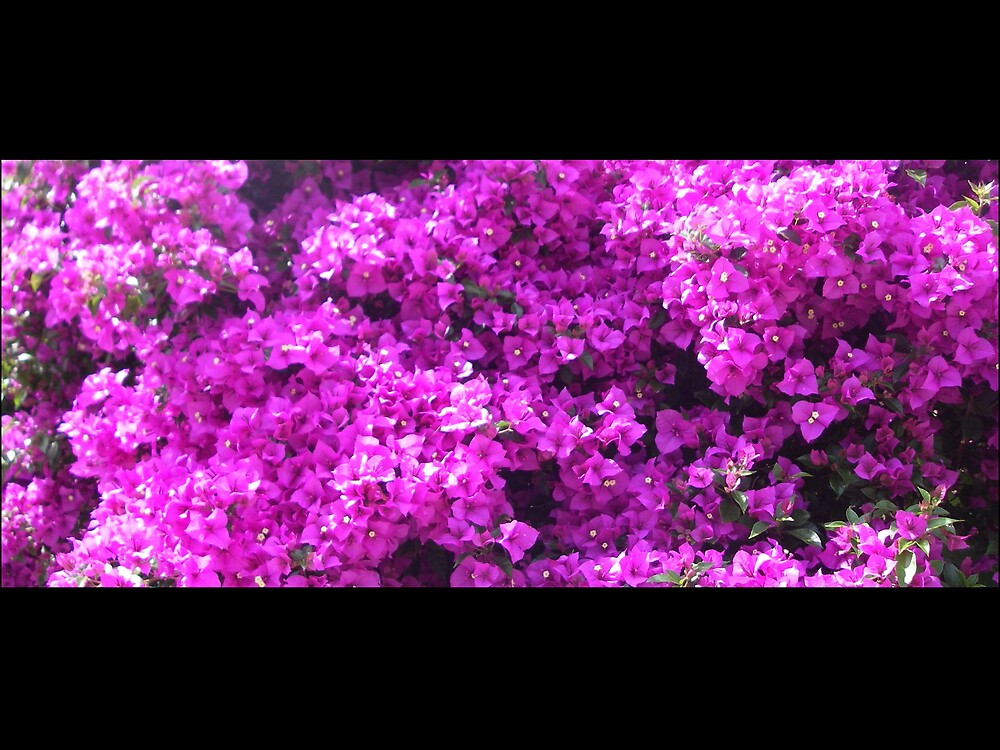Pretty Purple Panorama by Cre8iveAngel