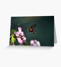 SEARCHING NECTAR Greeting Card