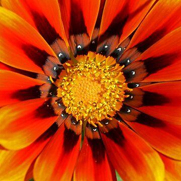 Fire Daisy by Snelvis