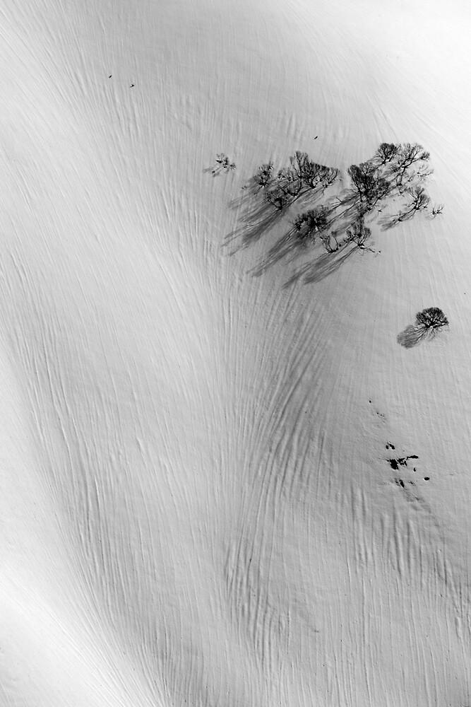 Windswept snow and Snow Gums by John Barratt