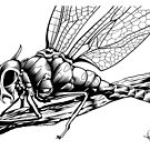 Demon Fly by Scott Robinson