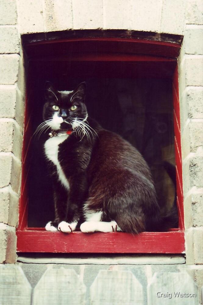 Closeup of a cat's eye #2 by Craig Watson