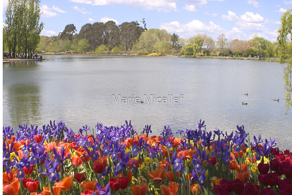 Lake Burley Griffin With Flowers by Shutterbug