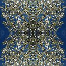 Blossom Burst #2 by John Hill-Daniel