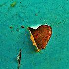 Heart opening by FlowersRHidden