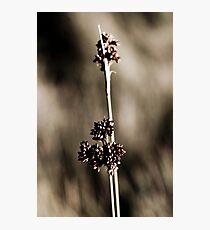 Grass Blade Photographic Print