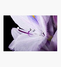 Water Flower Photographic Print