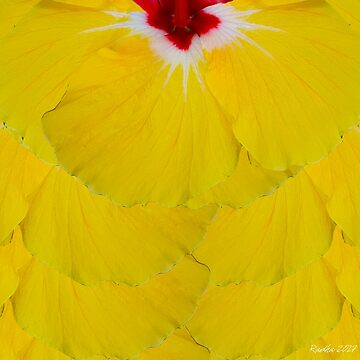 Yellow Amapola Flower by radcarr