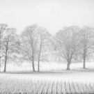 Vineyard in winter. by David Tovey