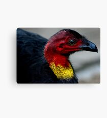 Australian Brush Turkey Canvas Print