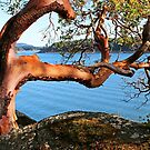 Summer and an Arbutus tree by TerrillWelch