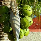 Coconut Tree by ctheworld