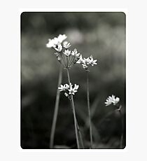 Simplicity Photographic Print