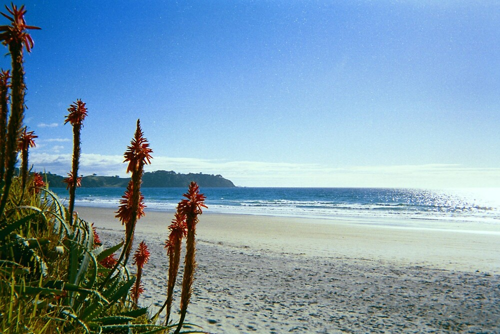 New Zealand, Waiheke by martin pearson