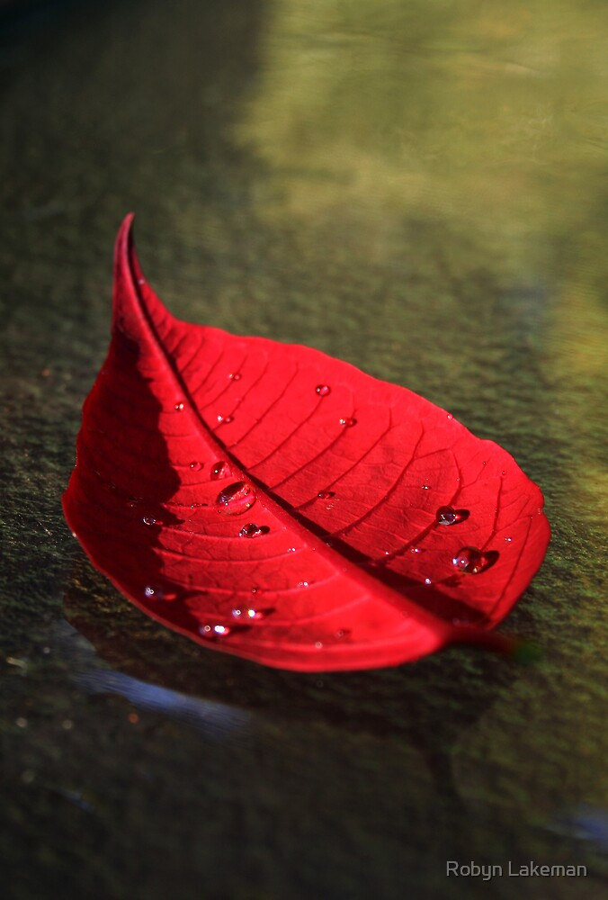 Red Pointsettia by Robyn Lakeman
