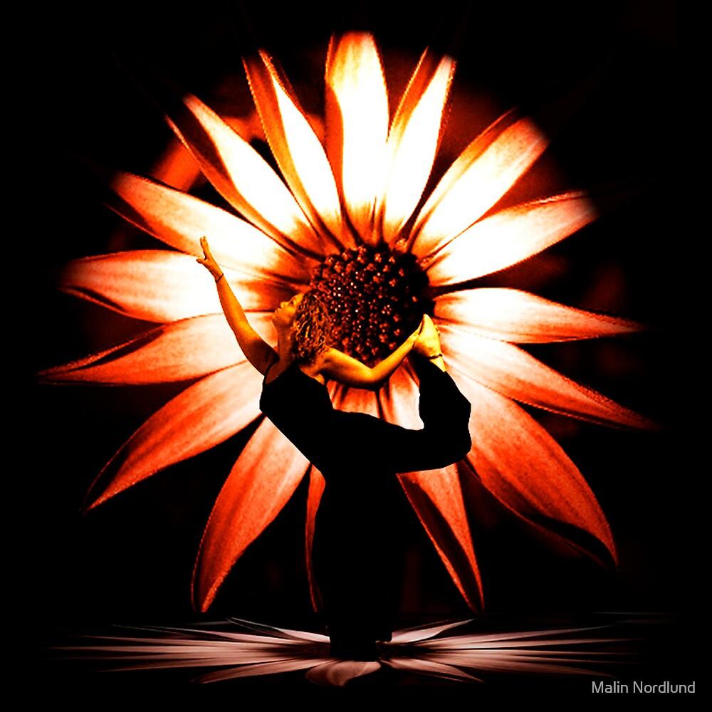 flowerdance by Malin Nordlund
