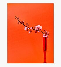 pink blossom I Photographic Print