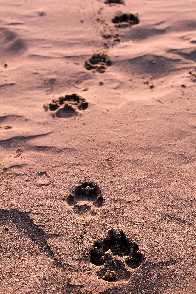 Footprints in the Sand by sid8chris