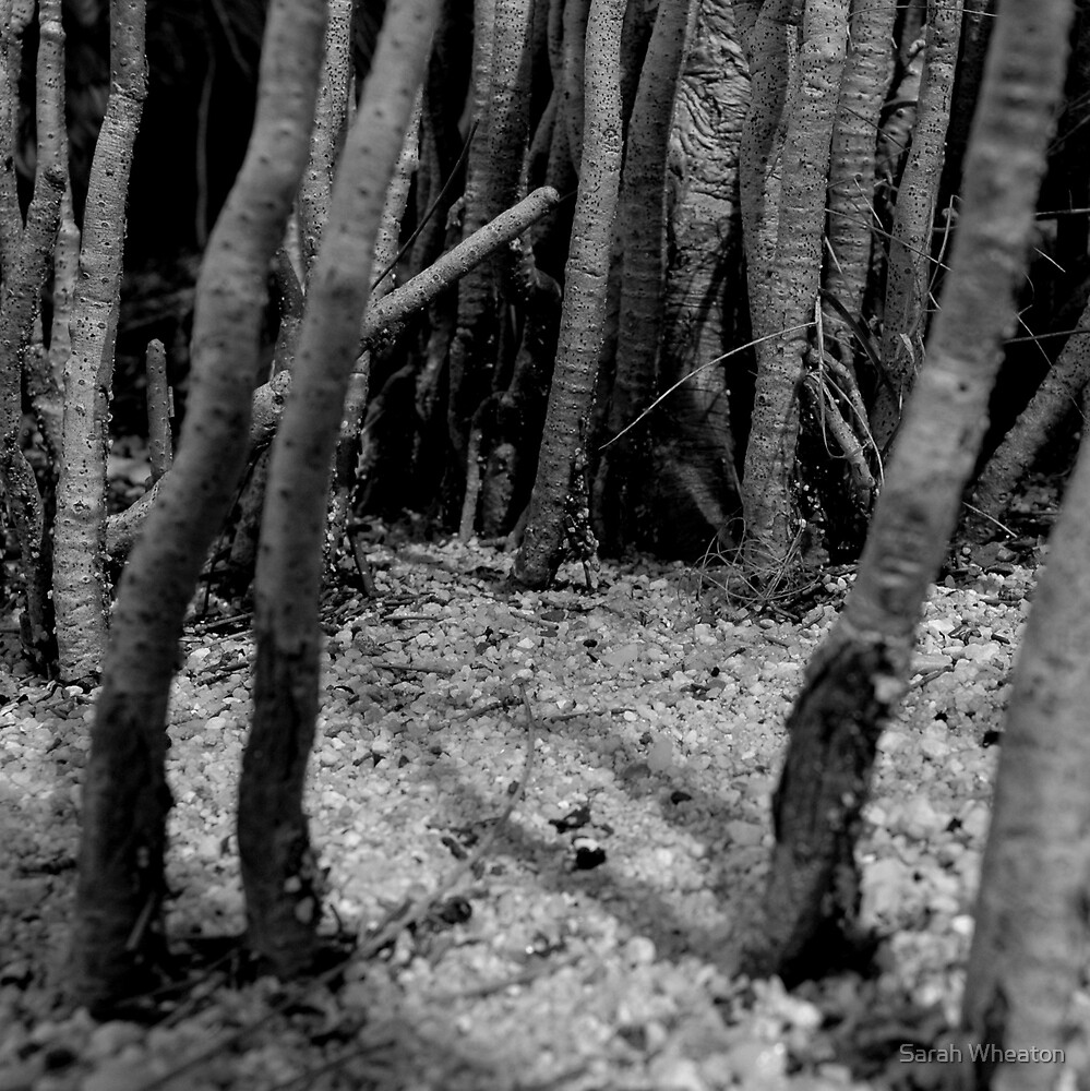 mangrove by Sarah Wheaton