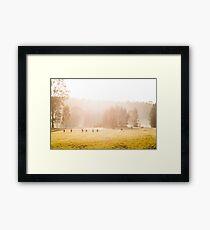 Kangaroos at sunrise Framed Print